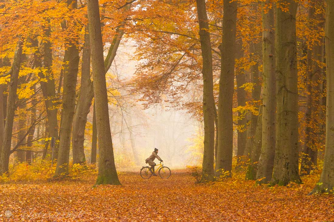 Herbstwald Farben